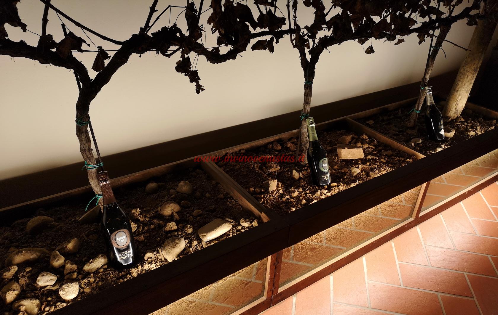 Dettaglio 6 terreni da cui 6 vini Villa Crespia